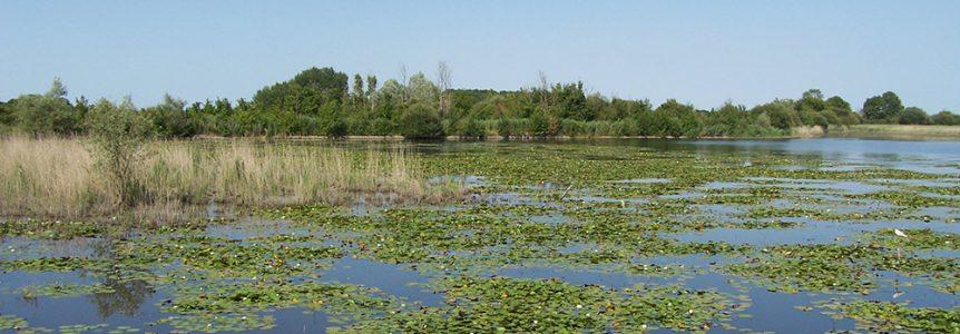 CPIE-zone humide- gestion de la biodiversité.MOREAU