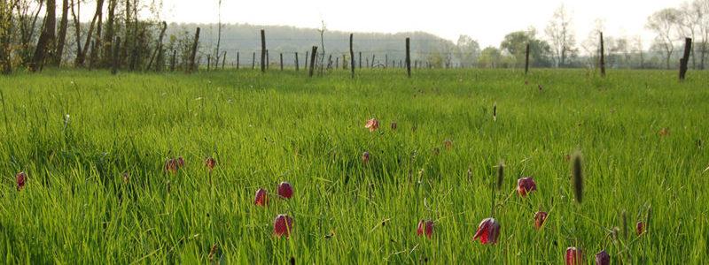 cpie-Prairie a fritillaires-inventairebiodiversité